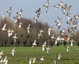 Competition Bedrijvig Groen/ Bird Hub/ Noord-Holland/ NL/ Jan 2017